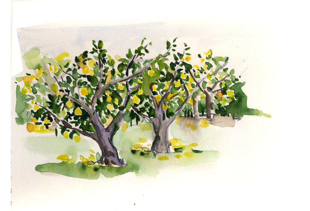 salina limoni